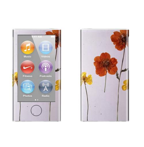 Наклейка на iPod&MP3 Apple iPod nano  7th gen. Ромашки,  купить в Москве – интернет-магазин Allskins, цветы, ромашки, фотография, натуральное, без фотошопа
