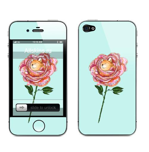 Наклейка на Телефон Apple iPhone 4S, 4 ●цветок●,  купить в Москве – интернет-магазин Allskins, любовь, цвет, цветы, красный, красота, кошка