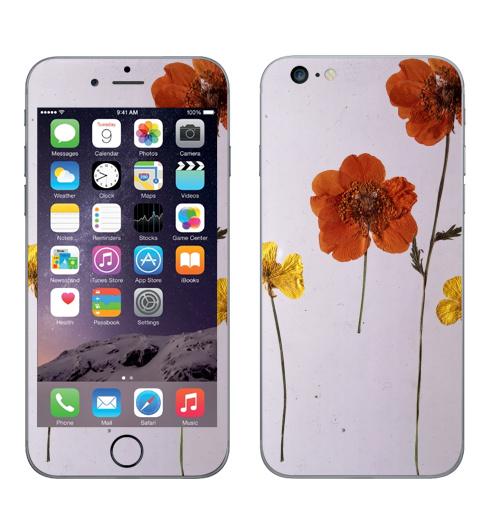 Наклейка на Телефон Apple iPhone 6 plus Ромашки,  купить в Москве – интернет-магазин Allskins, цветы, ромашки, фотография, натуральное, без фотошопа