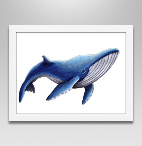 Фотография футболки Синий кит